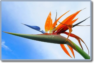 Flore Et Fleurs De La Martinique