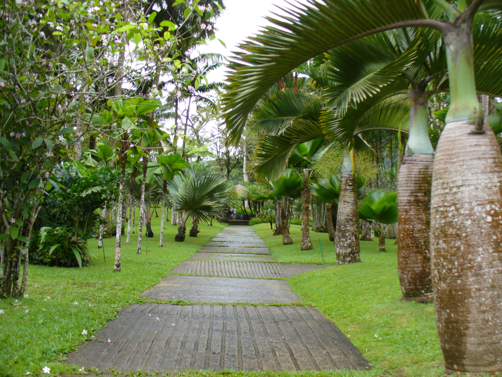 Le Jardin De France Of Fort De France Martinique Cartes Photos Et Infos