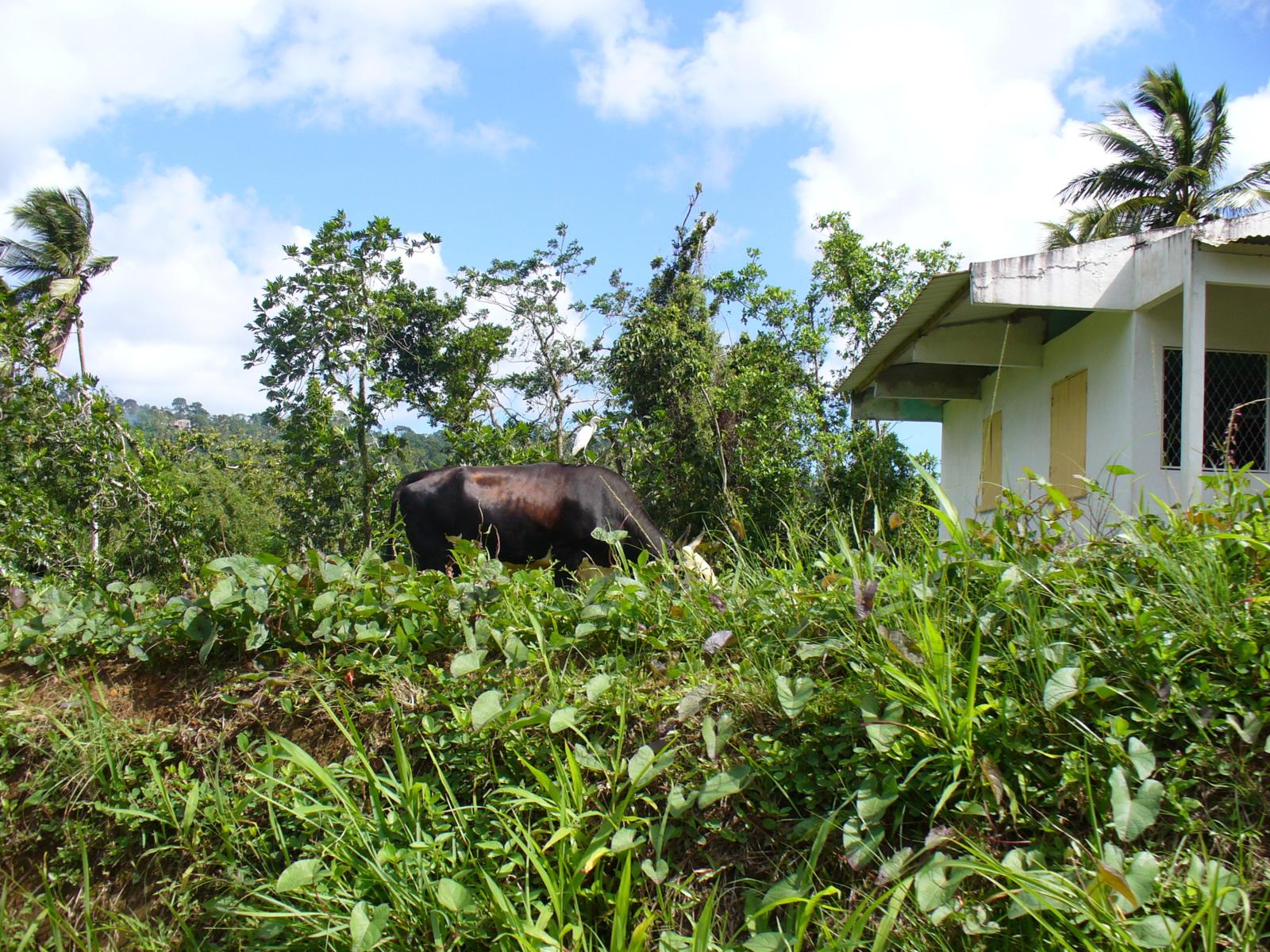 Gros Morne (Martinique) : Cartes, Photos et Infos Touristiques